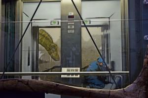 … fährt ab jetzt der Erdzeitfahrstuhl. Der Diplodocus ist begeisterter Passagier (Foto: Paul Brand)