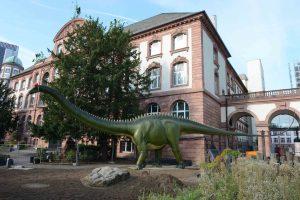 Wohlbehalten wieder zurück gekehrt vor das Senckenberg Naturmuseum in Frankfurt – der Diplodocus. Alle Fotos: Senckenberg/Tränkner