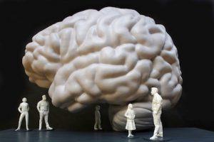 So soll das begehbare Gehirn im neuen Senckenberg aussehen. Ein Modell im Maßstab 1:10. © Modell: Hertie-Stiftung 2018, Alexander Grychtolik/Foto: U. Dettmar