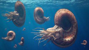 Ammoniten, längst ausgestorbene Tintenfischverwandte, zählten zu den beliebtesten Beutetieren vieler Meeressaurier. Copyright: Die Infografen UG