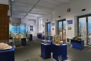 """Ausstellungsraum """"Korallenriffe – Bedrohte Schätze der Ozeane"""" im Senckenberg Naturmuseum."""