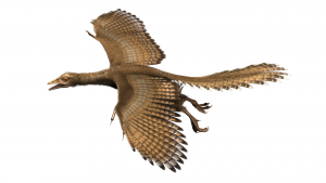 """Für die Ausstellung """"Gefiederte Dinosaurier"""" wurde eine Computeranimation des Archaeopteryx erstellt – ausgehend von den Erkenntnissen über das Gefieder am 11. Exemplar. Copyright: Die Infografen"""
